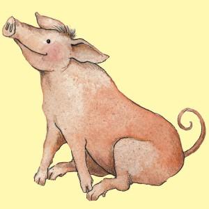 Bild Schwein